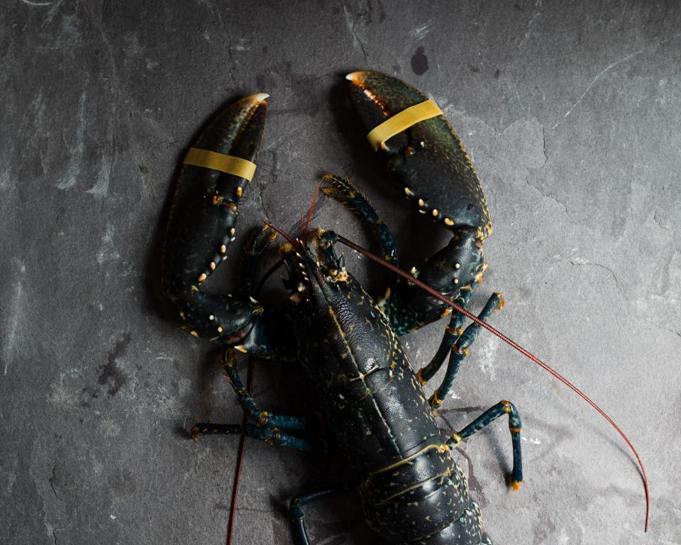A black lobster lies on a slate